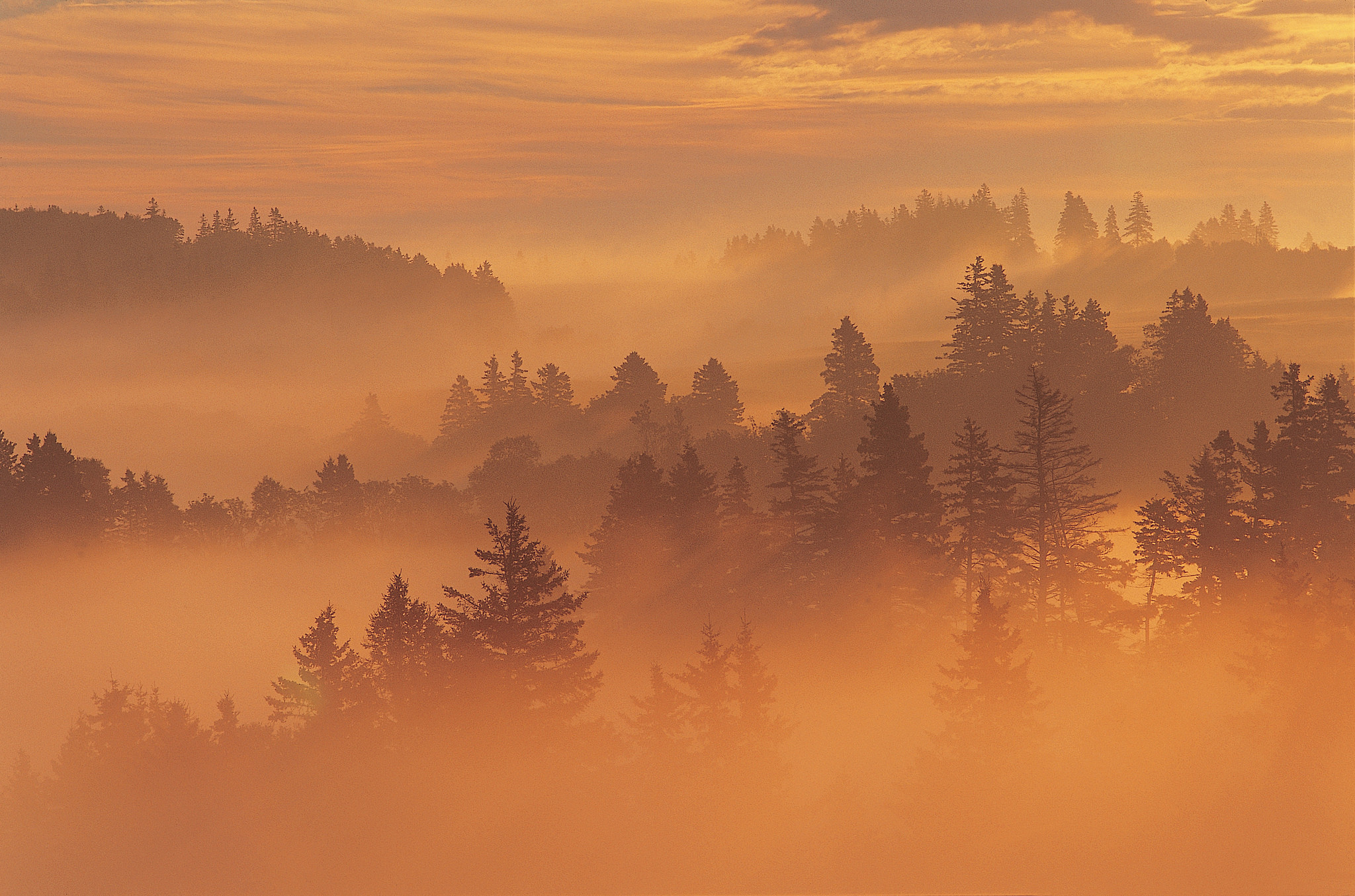 Misty forests